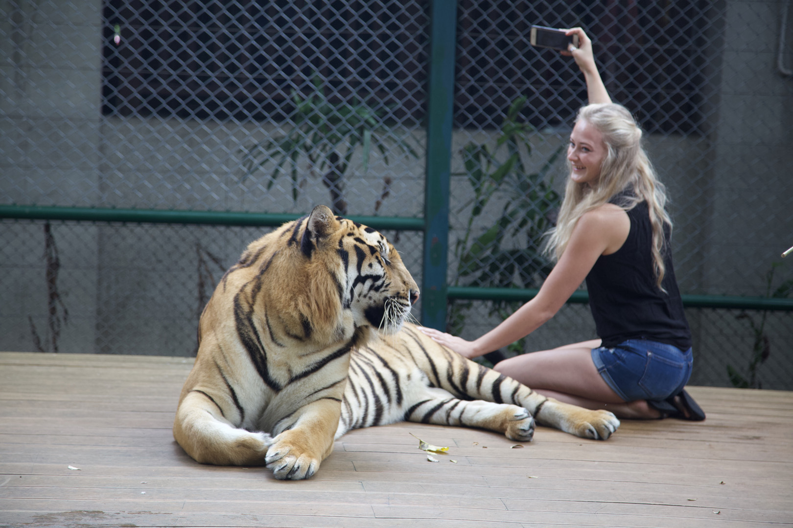 Russian tourist takes a selfie, Tiger Kingdom