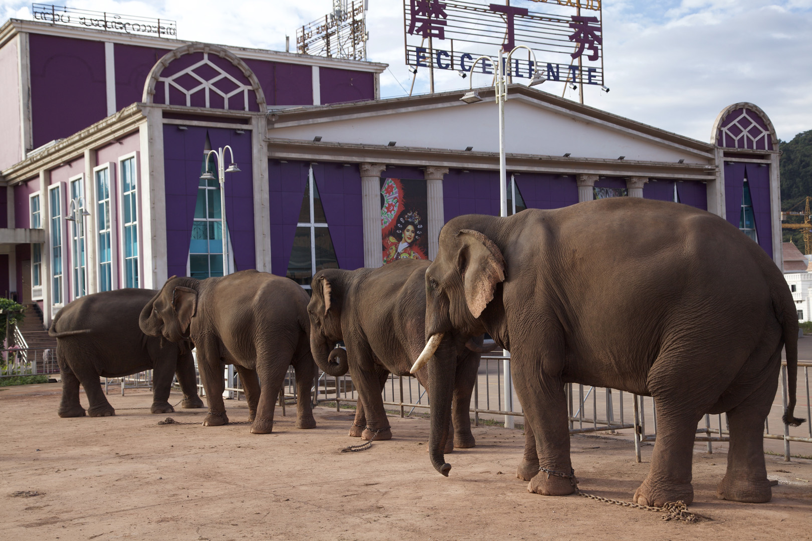 Elephants, lady boys and a Chinese audience
